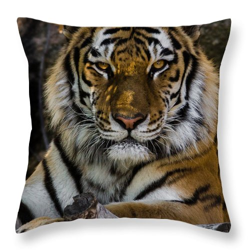 Tiger Throw Pillow featuring the photograph Amur Tiger Watching You by Ernie Echols
