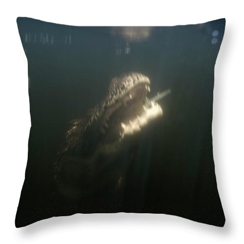 Alligator Throw Pillow featuring the photograph An Alligator Rises Up From The Depths by Chris Ross