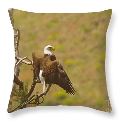 Eagles Throw Pillow featuring the photograph An Eagle Stretching Its Wings by Jeff Swan