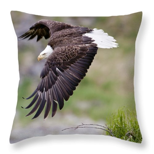 Female Throw Pillow featuring the photograph An Female Eagle Flys Protectively Over by Ken Baehr
