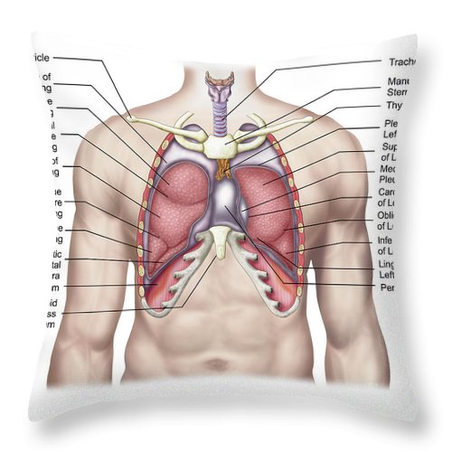 Anatomy Of Human Lungs In Situ Throw Pillow For Sale By Stocktrek Images