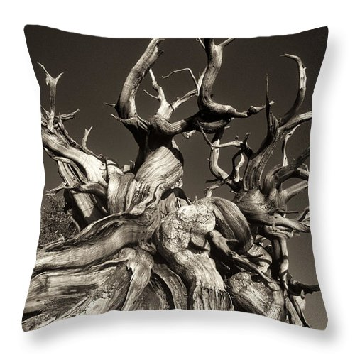 American Throw Pillow featuring the photograph Ancient Bristlecone Pine In Black And White by Dave Welling