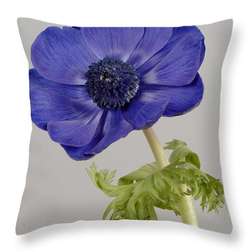 Close Up Throw Pillow featuring the photograph Anemone by Nigel Cattlin