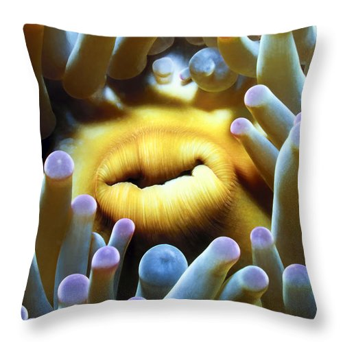 Micronesia Throw Pillow featuring the photograph Anenomes 1 by Dawn Eshelman