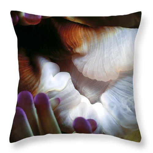 Micronesia Throw Pillow featuring the photograph Anenomes 2 by Dawn Eshelman