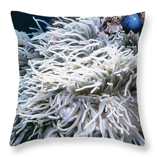 Micronesia Throw Pillow featuring the photograph Anenomes 9 by Dawn Eshelman
