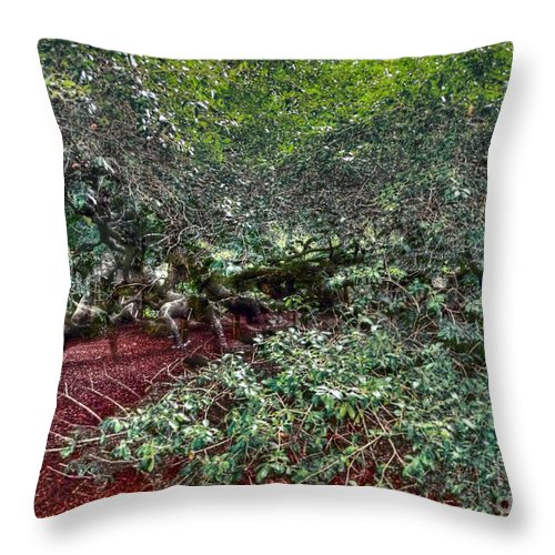 Angel Throw Pillow featuring the photograph Angel Oak Tree 3 by Kathleen Struckle