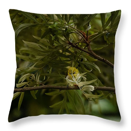 Oriental White-eye Throw Pillow featuring the photograph Angry Bird - Oriental White-eye by Saurav Pandey