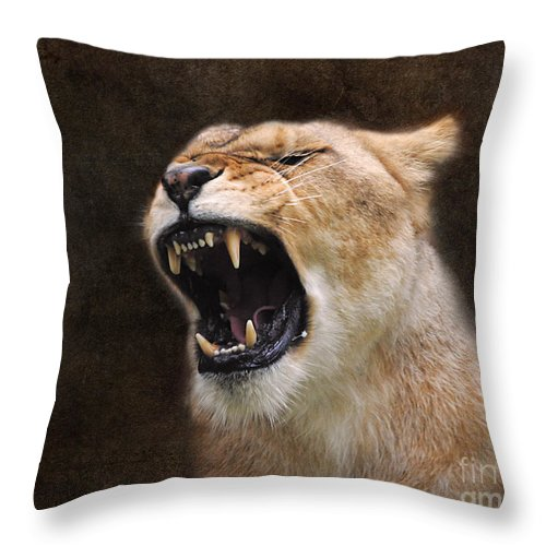 Animal Throw Pillow featuring the photograph Angry Lioness by Jai Johnson