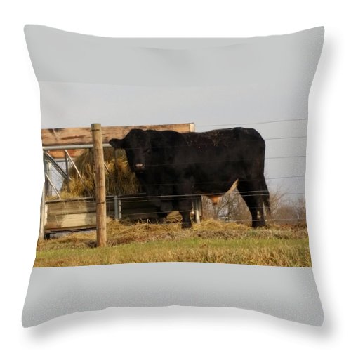 Animals Throw Pillow featuring the photograph Angus Bull by Donna Stiffler