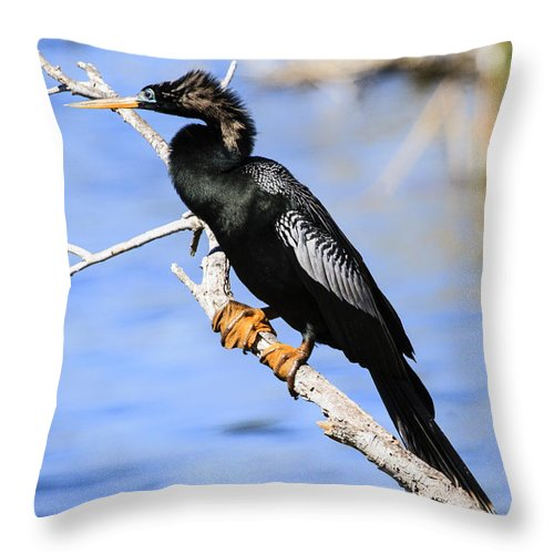 Wildlife Throw Pillow featuring the photograph Anhinga by Gary Hall