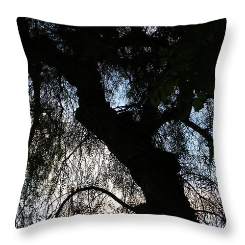 California Pepper Tree Throw Pillow featuring the photograph Anna's Mood by Linda Shafer