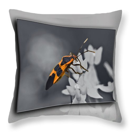 Milkweed Bug Throw Pillow featuring the photograph Another World by Carolyn Marshall