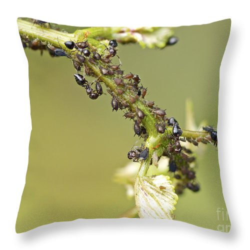 Ants Throw Pillow featuring the photograph Ant Farm by Mother Nature
