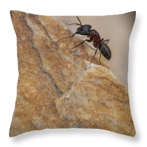 Ant Throw Pillow featuring the photograph Ant Macro by Fran Riley