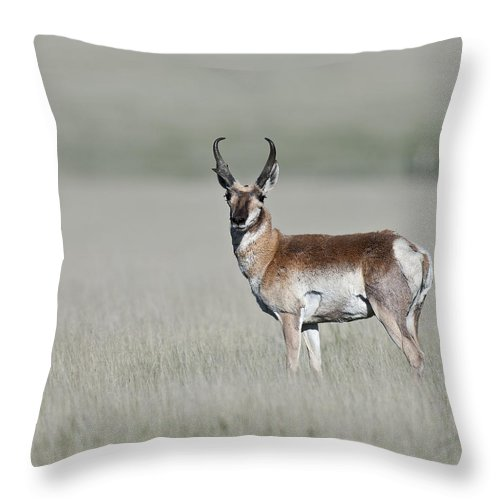 Antelope Buck Throw Pillow featuring the photograph Antelope Buck by Gary Langley
