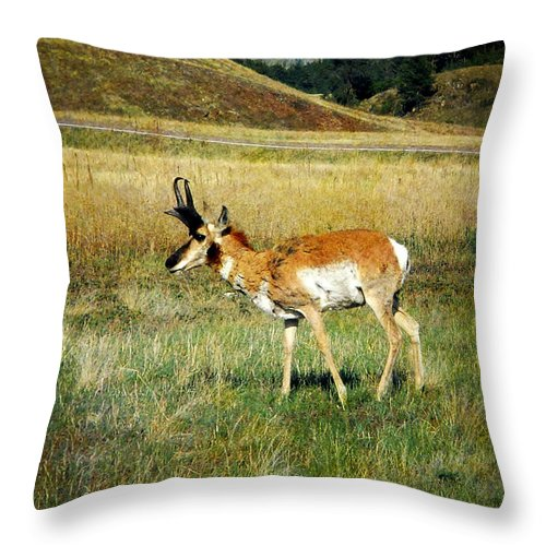 Wildlife Throw Pillow featuring the photograph Antelope by Judy Hall-Folde