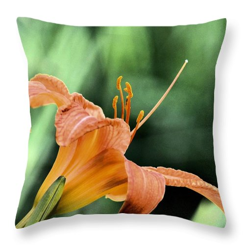 Anthers Aglow Throw Pillow featuring the photograph Anthers Aglow by Maria Urso