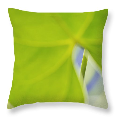 Plant Throw Pillow featuring the photograph Anthurium by Silke Magino