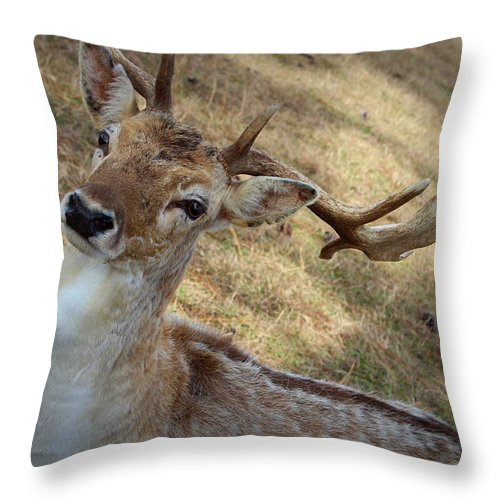 Antlers Throw Pillow featuring the photograph Antlers by Beth Vincent