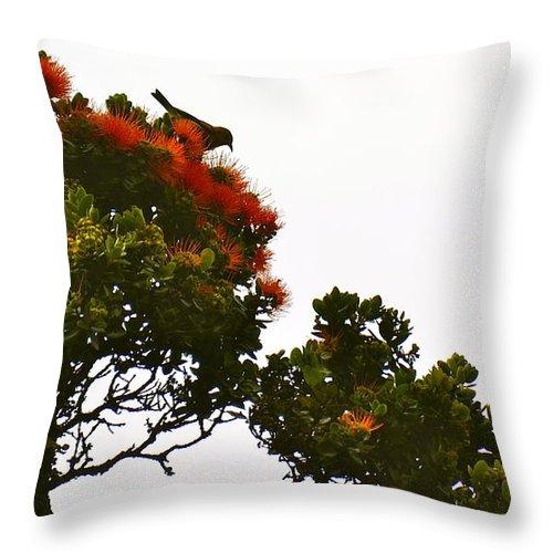 Hawaii Throw Pillow featuring the photograph Apapane Atop An Orange Ohia Lehua Tree by Lehua Pekelo-Stearns