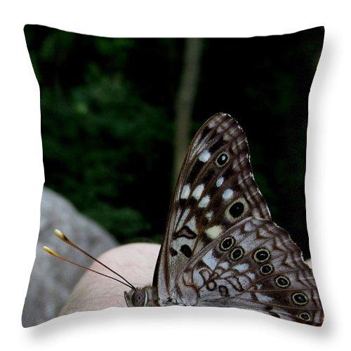 American Empress Butterfly Throw Pillow featuring the photograph Appalachian Empress by Joshua Bales