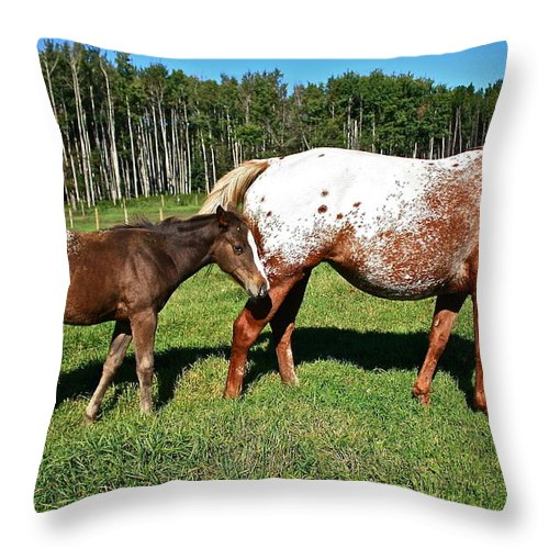 Horse Throw Pillow featuring the photograph Appaloosa Mamma And Baby by Linda Bianic