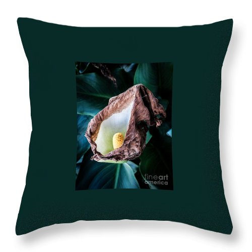 Nature Throw Pillow featuring the photograph Appease Smile by Fei A
