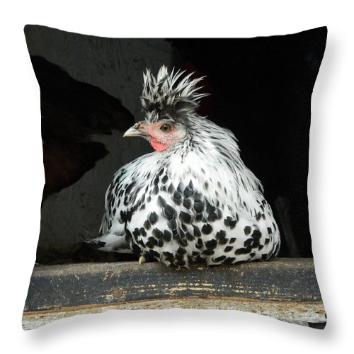 Appenzeller Throw Pillow featuring the photograph Appenzeller Just Hanging Out by George Pedro