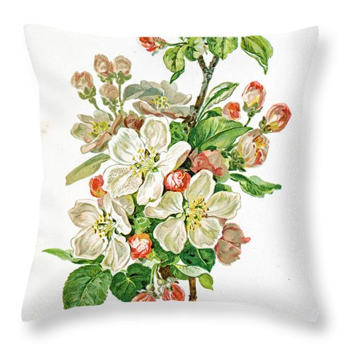 Cherry Throw Pillow featuring the digital art Apple Blossom 19 Century Illustration by Mashuk
