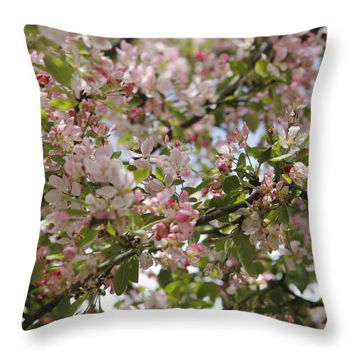 Apple Blossom Throw Pillow featuring the photograph Apple Blossom by Ronald Jansen