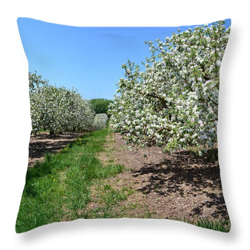 Spring Throw Pillow featuring the photograph Apple Blossoms by Michelle Calkins