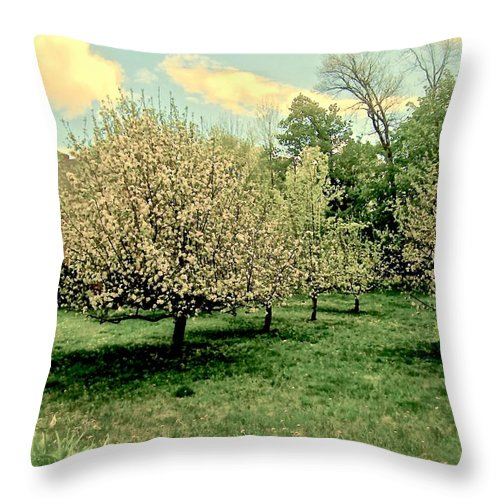 Apple Trees Throw Pillow featuring the photograph Apple Orchard by Elizabeth Tillar