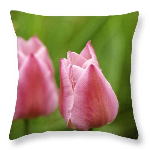 M.c. Story Throw Pillow featuring the photograph Apple Pink Tulips by Mary Carol Story