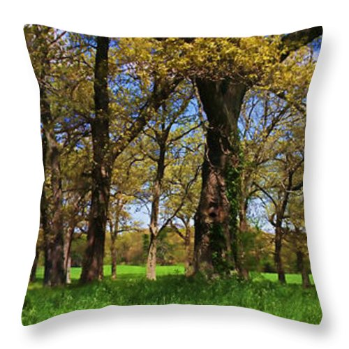 Tree Throw Pillow featuring the photograph Appleton Farm by K Hines
