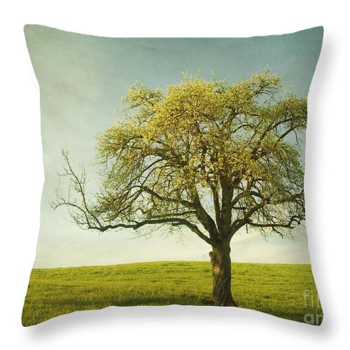 Appletree Throw Pillow featuring the photograph Appletree by Priska Wettstein