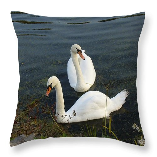 Swans Couple Throw Pillow featuring the photograph Appreciation Of Love by Lingfai Leung