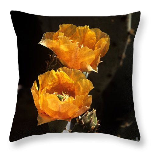 Cactus Throw Pillow featuring the photograph Apricot Blossoms by Kathy McClure