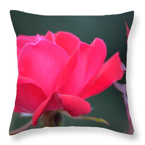 April's Red Rose 2013 Throw Pillow featuring the photograph April's Red Rose 2013 by Maria Urso