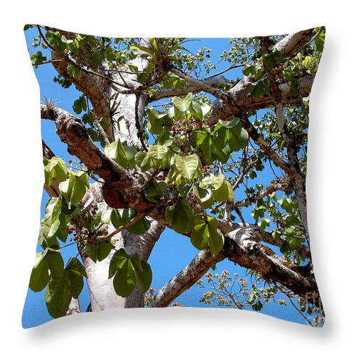 Panama Throw Pillow featuring the photograph Panama Tree With Flowers by Vladimir Berrio Lemm