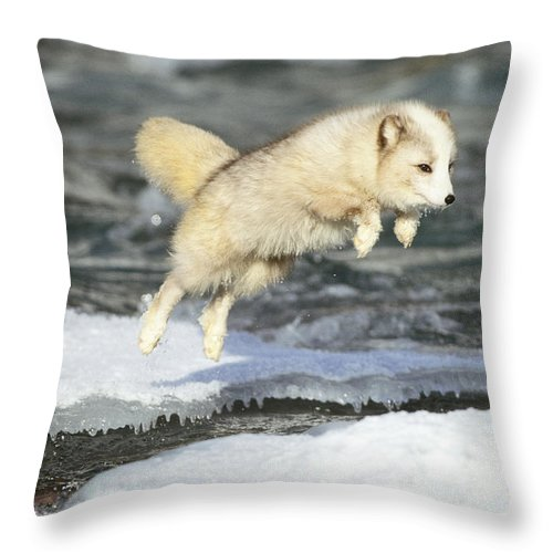 Animal Throw Pillow featuring the photograph Arctic Fox Jumping by Jeffrey Lepore
