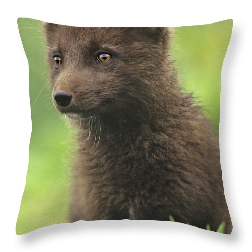 North America Throw Pillow featuring the photograph Arctic Fox Portrait Alaska Wildlife by Dave Welling