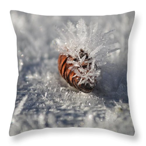 Arctic Throw Pillow featuring the photograph Arctic Pine Cone Porcupine by Brian Boyle