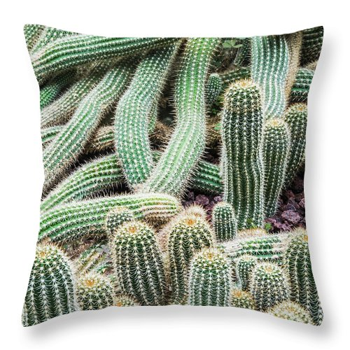Heap Throw Pillow featuring the photograph Argentine Giant Cactus by Andy Sotiriou