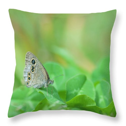 Insect Throw Pillow featuring the photograph Argus Rings Butterfly by Polotan