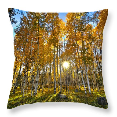 Aspens Throw Pillow featuring the photograph Arizona Gold by Cheyenne L Rouse