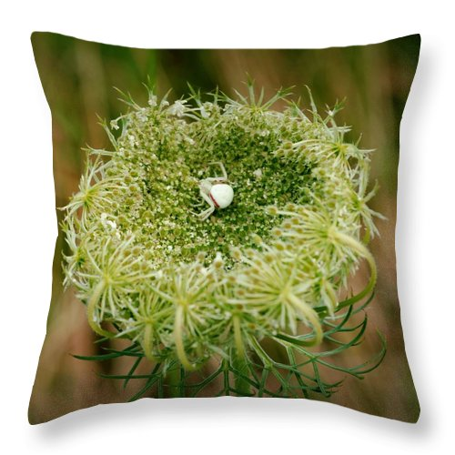 White Spider Throw Pillow featuring the photograph Arrogant Stalker by Laureen Murtha Menzl