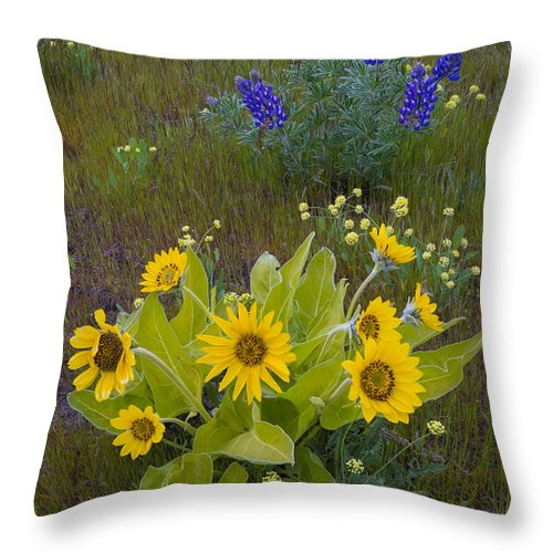 Nature Throw Pillow featuring the photograph Arrowleaf Balsamroot And Lupine by John Shaw