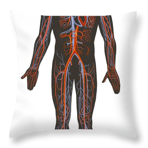 Vertical Throw Pillow featuring the digital art Arteries And Veins Of The Human Body by TriFocal Communications