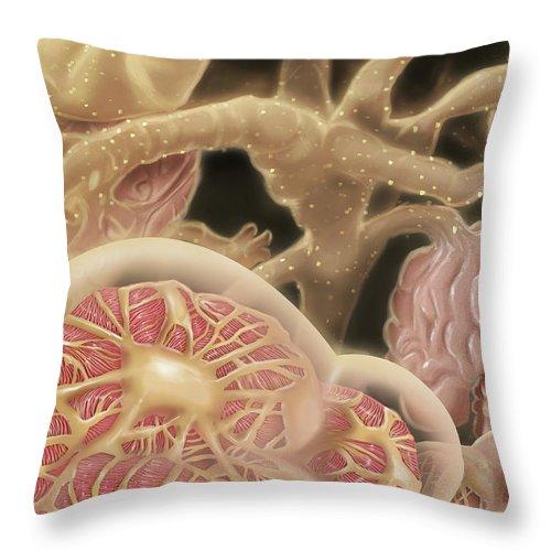 Nephron Throw Pillow featuring the digital art Artist Depcition Of Glomerulus by Alan Gesek/stocktrek Images
